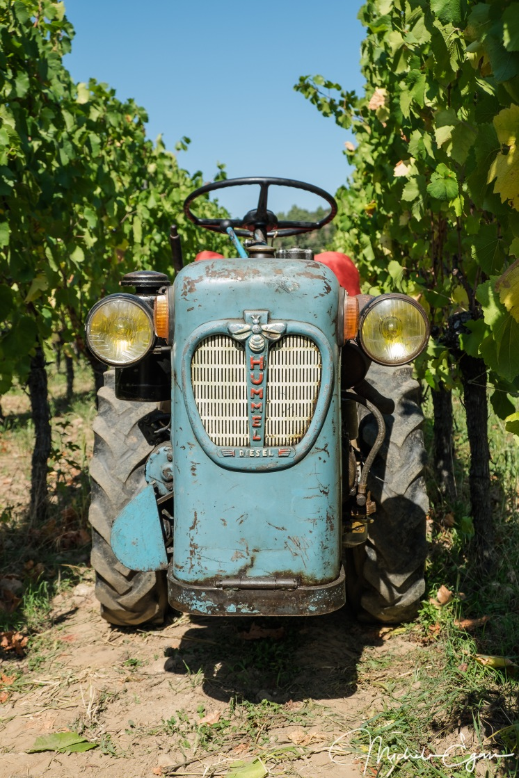 The narrow 1950's tractor that is just wide enough to fit within the rows of vines to move the barrels to the truck