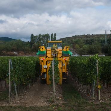 Mechanized harvest